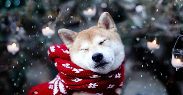 Çin Astrolojisine Göre 2018 Ylı Köpek Yılı Olacak