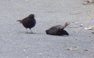 Küçük kuştan ibretlik ders