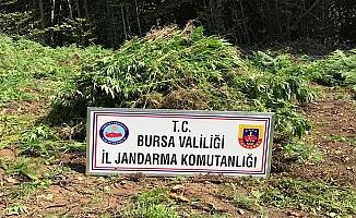 Bursa'daki Operasyonlarda Yüklü Miktarda Uyuşturucu Ele Geçirildi