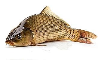 O Balıkların Sayısı Bursa'da Hızla Artacak