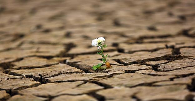 Kuraklık Muğla'da yaşamı durdurdu