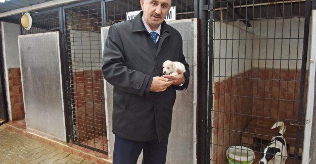 Mustafakemalpaşa'da Sokak hayvanlarına sıcak yuva
