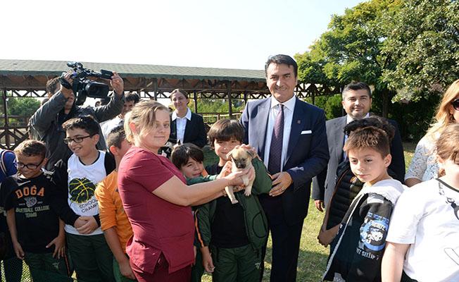Osmangazi Belediyesi 2 ayda 926 hayvana sahip çıktı