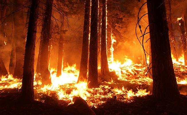 Bursa Orhaneli'de Orman Yangını