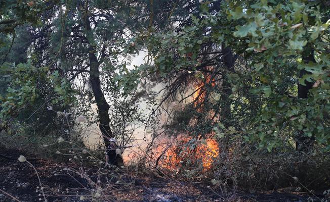 Bursa'daki Orman Yangını Kontrol Altına Alındı