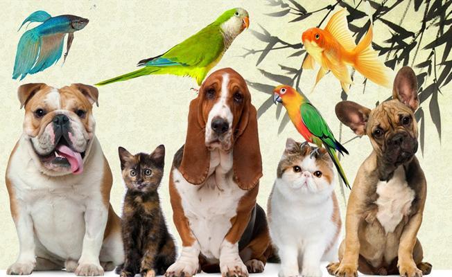 Bursa'daki Pet-shop Sahipleri İçin Büyük Fırsat