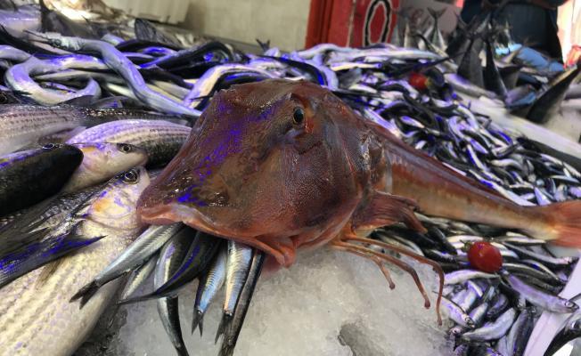 Bursa'da Balık Tezgahları Şenlendi