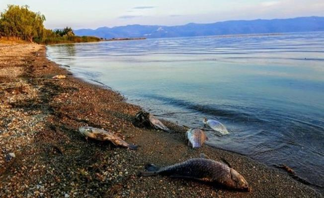 Bursa İznik Gölü 1 Ayda 3 Metre Çekildi!