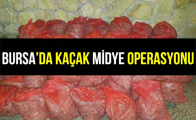 Bursa Mudanya'da Kaçak Midye Operasyonu!