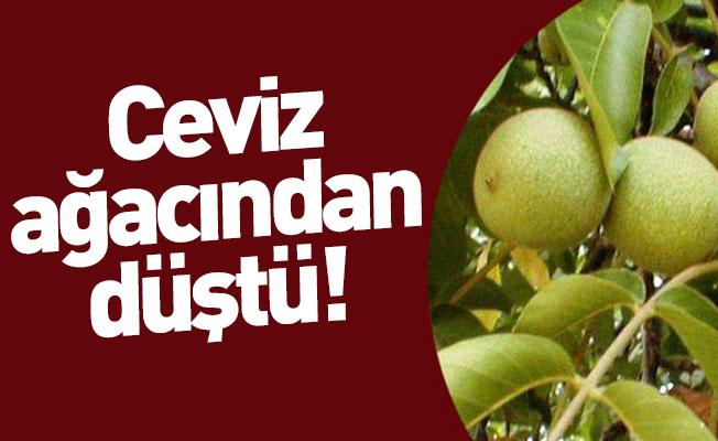 Bursa'da Ceviz Ağacından Düşen Şahıs Hayatını Kaybetti