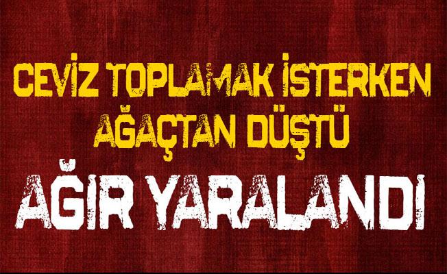 Bursa'da Ceviz Ağacından Düşen Yaşlı Adam Ağır Yaralandı