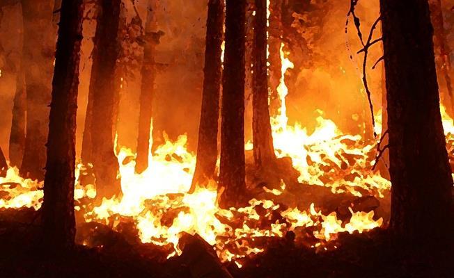 Bursa Keles'teki Yangın Korkuttu