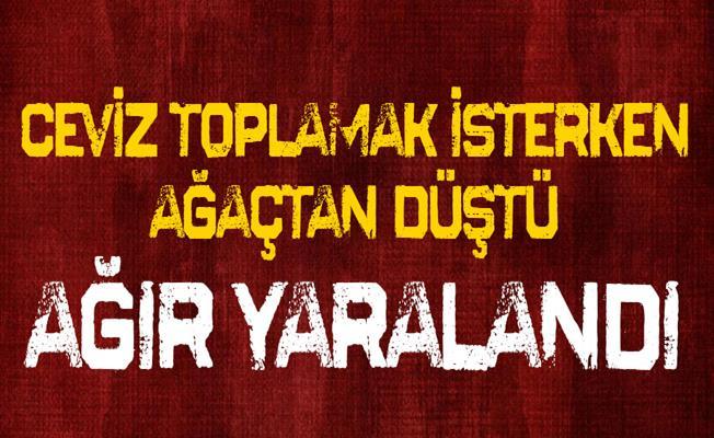 Bursa'da Ceviz Ağacından Çapa Makinesinin Üzerine DÜştü