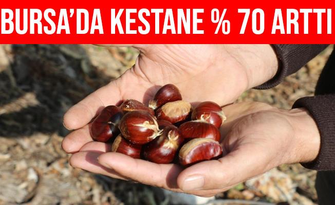 Bursa'da Kestane Rekoltesi Yüzde 70 Arttı