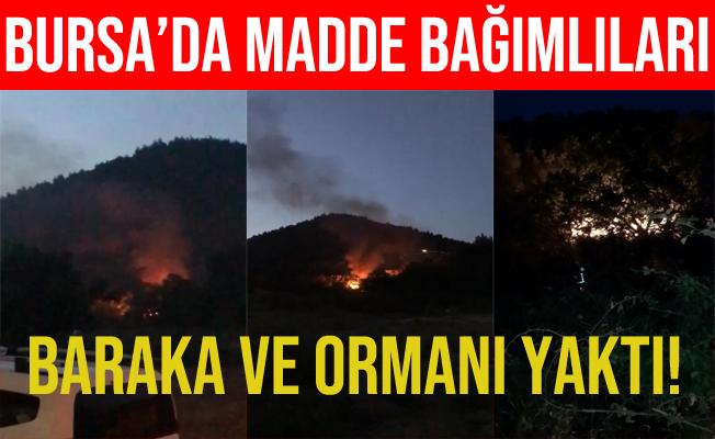 Bursa'da Madde Kullanırken Ormanı ve Barakayı Yaktı