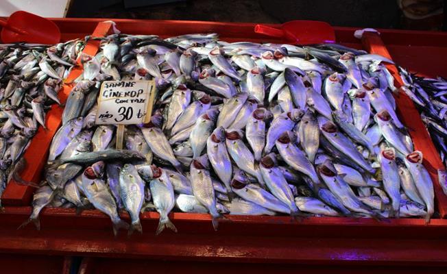 Bursa'da Ucuzlayan Çinekop Balığı Kapışıldı