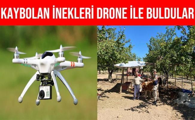 Malatya'da Kaybolan İnekler Drone İle Bulundu