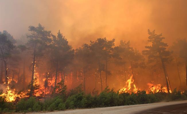 Manisa'da Ormanı Yakmaya Çalışan Şahıs Gözaltına Alındı