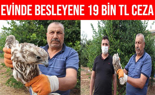 Mersin'de Evinde Şahin Besleyen Şahıs 19 bin TL Ceza Yedi