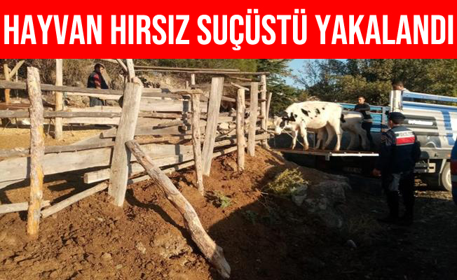 Mersin'de Hayvan Hırsızı Suçüstü Yakalandı