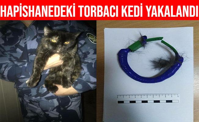 Rusya'da Hapishane İçinde Uyuşturucu Taşıyan Kedi Yakalandı