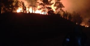 Oymapınar'da orman yangını