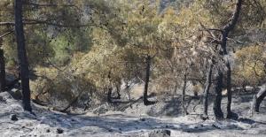 Tokat'ta 90 hektar ormanlık alan kül oldu