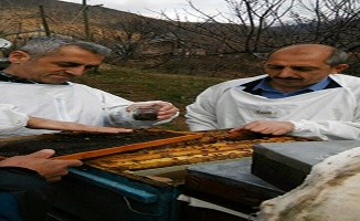 Tunceli'deki arı ölümleri inceleniyor