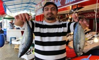 Marmara'da balıkçılar palamutla güldü