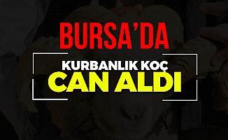 Bursa'da Koç'un Vurduğu Kadın Hayatını Kaybetti