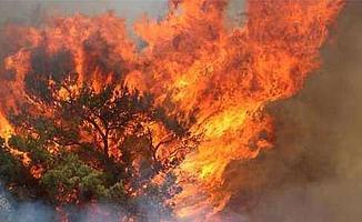 Yine Bursa Yine Orman Yangını