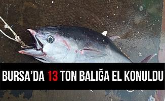 Bursa'da Halk Sağlığı için Tehdit Oluşturan 13 Ton Balığa El Konuldu!