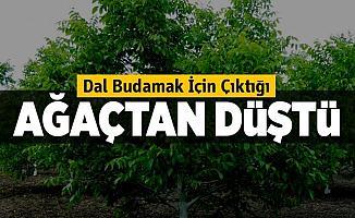 Bursa'da Budama Yaptığı Ağaçtan Düşen Şahıs Yaralandı