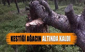 Bursa İnegöl'de Kestiği Ağaç Üzerine Devrildi!