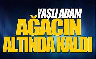 Bursa'da Yaşlı Adam Kestiği Ağacın Altında Kaldı