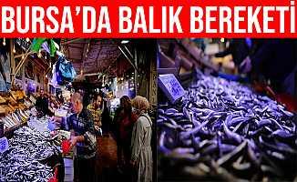 Bursa'da Balık Bereketi Yaşanıyor