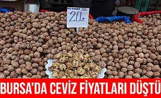 Bursa'da Ceviz Fiyatları Düştü