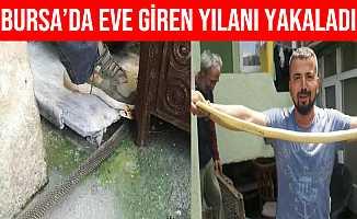 Bursa'da Kış Uykusuna Yatmayan Yılan Eve Girdi