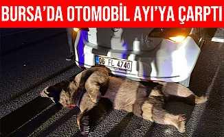 Bursa'da Otomobilin Çarptığı Ayı Telef Oldu