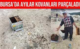 Bursa Mustafakemalpaşa'da Arıcıların Başı Ayılarla Dertte