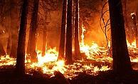 Kazdağları'nın eteklerinde orman yangını