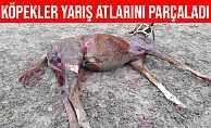 Eskişehir'de Aç Kalan Köpekler Yarış Atlarını Parçaladı