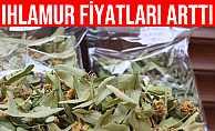 Grip İlacının Kalkanı Olan Ihlamurun Kilosu 400 Lira Oldu